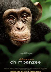 دانلود فیلم شامپانزه Chimpanzee 2012