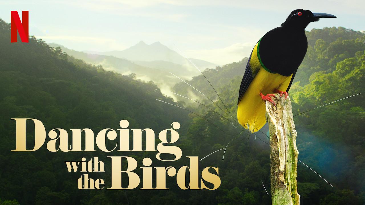 رقص با پرندگان (مستند)